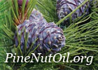 Pine Nut Oil Information